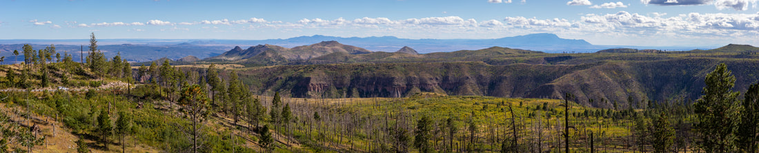 Photo of a Los Alamos landscape showing burned trees and new growth.